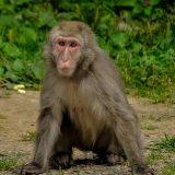 monkey-399303_1280