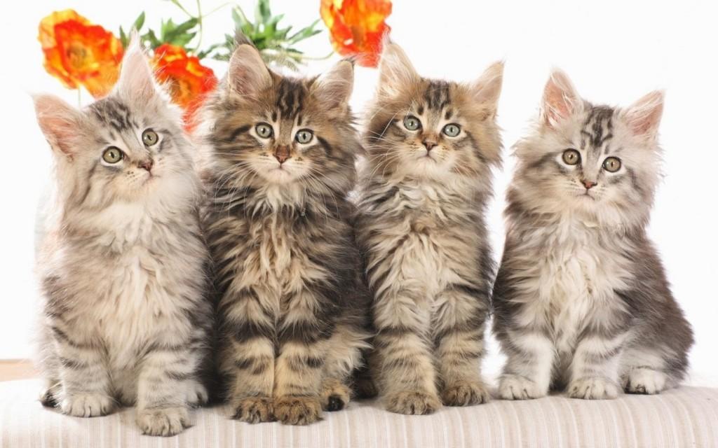 Animals_Cats_Cat_023761_