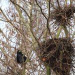 bird-nests-277515_1280